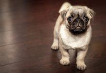 Diagnozowanie chorób u psów
